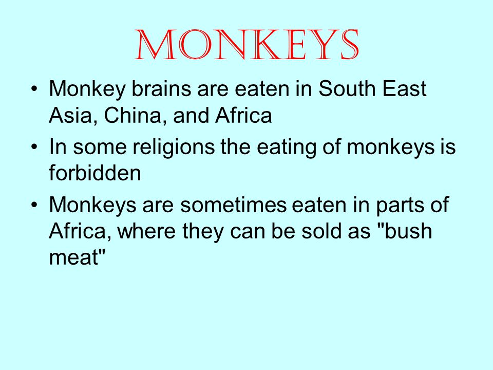 Monkeys Monkey brains are eaten in South East Asia, China, and Africa In some religions the eating of monkeys is forbidden Monkeys are sometimes eaten in parts of Africa, where they can be sold as bush meat
