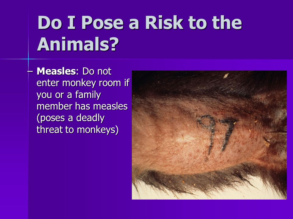 Do I Pose a Risk to the Animals? –Measles: Do not enter monkey room if you or a family member has measles (poses a deadly threat to monkeys)