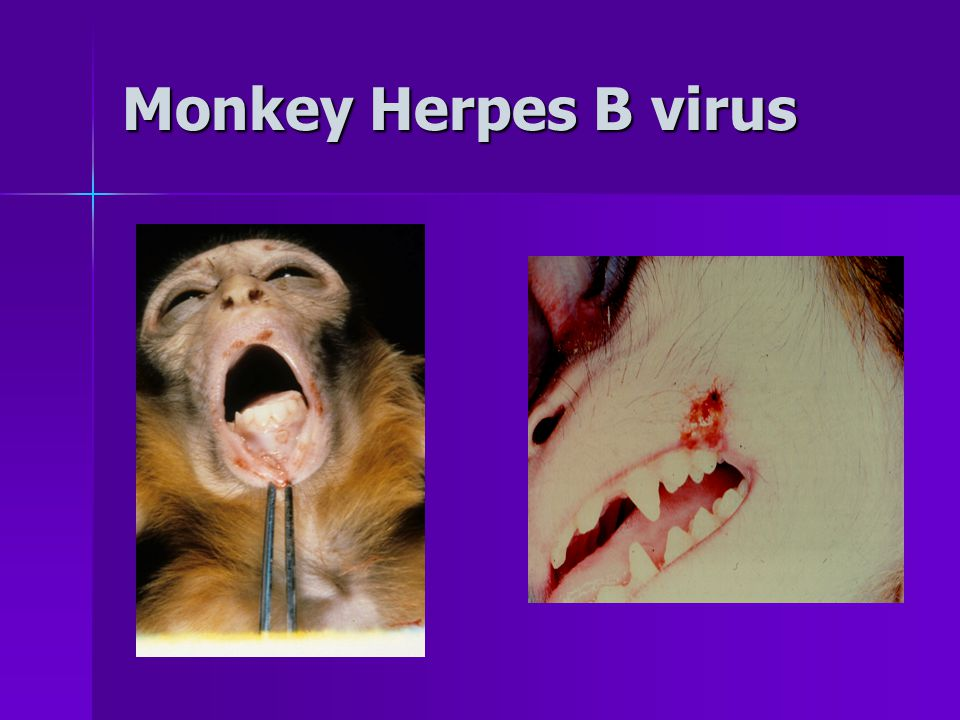 Is there a risk of me spreading disease from animal to animal.