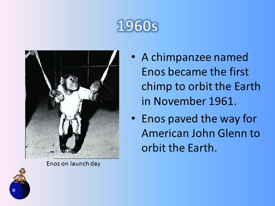 A chimpanzee named Enos became the first chimp to orbit the Earth in November 1961.