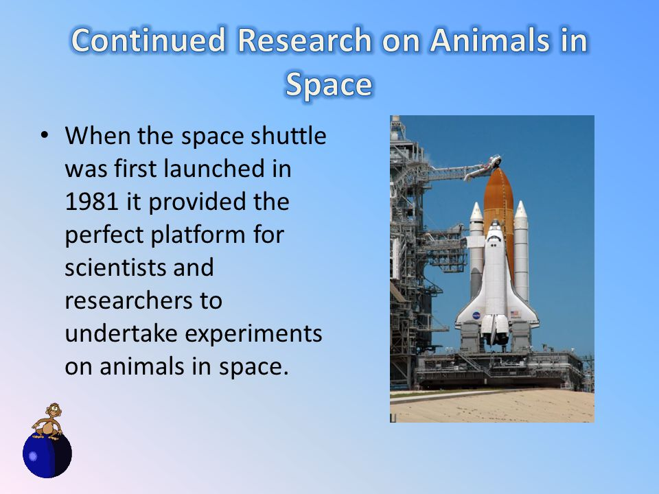 When the space shuttle was first launched in 1981 it provided the perfect platform for scientists and researchers to undertake experiments on animals in space.