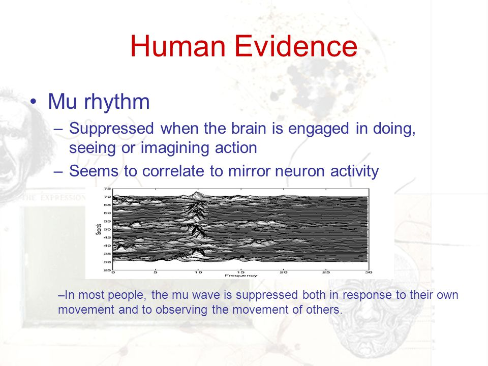 Human Evidence Mu rhythm –Suppressed when the brain is engaged in doing, seeing or imagining action –Seems to correlate to mirror neuron activity –In