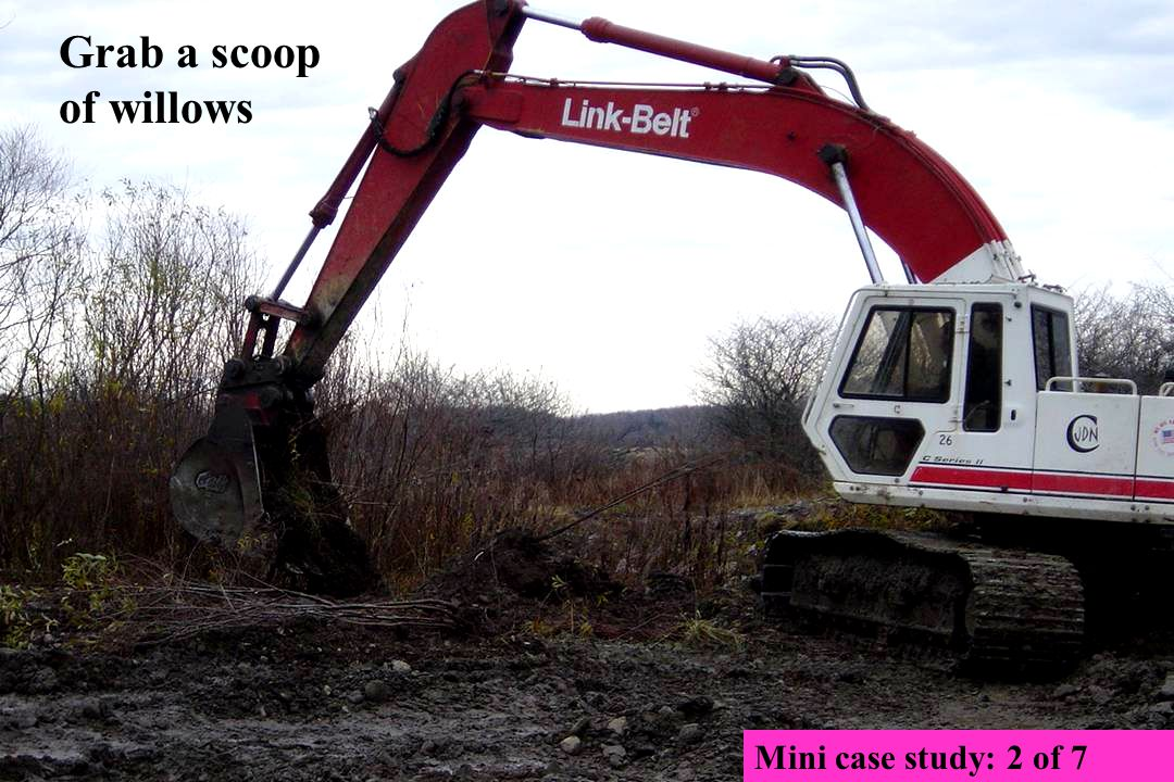 Grab a scoop of willows Mini case study: 2 of 7