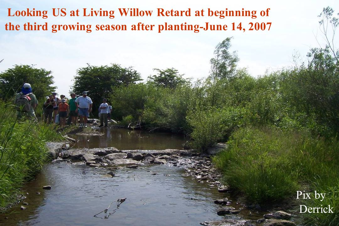 Looking US at Living Willow Retard at beginning of the third growing season after planting-June 14, 2007 Pix by Derrick