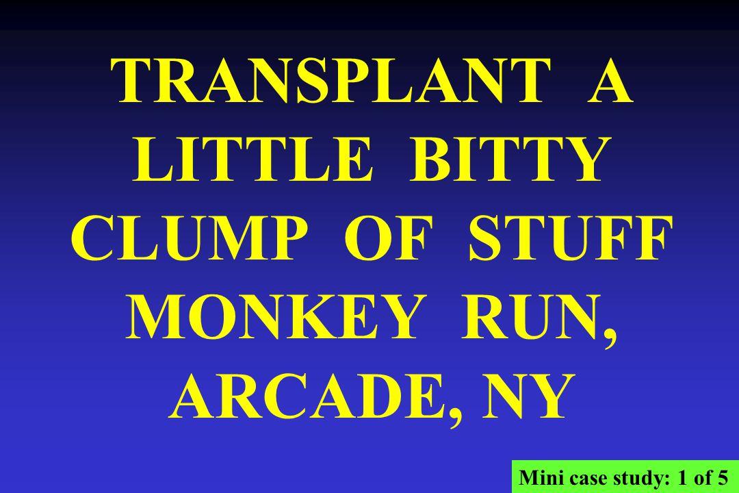TRANSPLANT A LITTLE BITTY CLUMP OF STUFF MONKEY RUN, ARCADE, NY Mini case study: 1 of 5