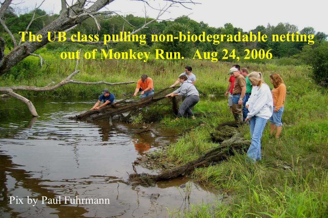 The UB class pulling non-biodegradable netting out of Monkey Run. Aug 24, 2006 Pix by Paul Fuhrmann