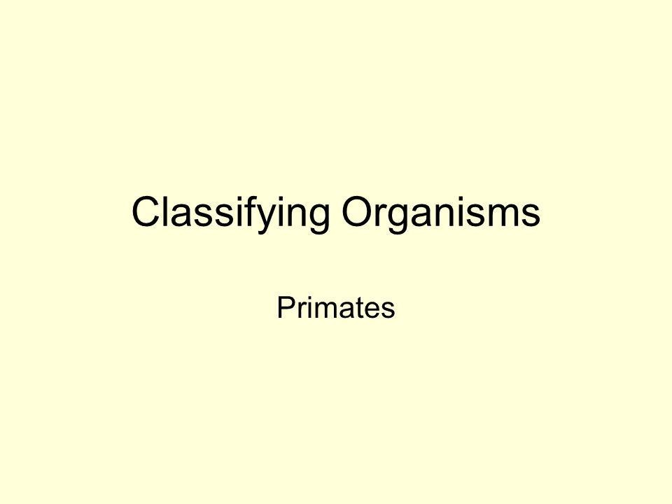 Classifying Organisms Primates