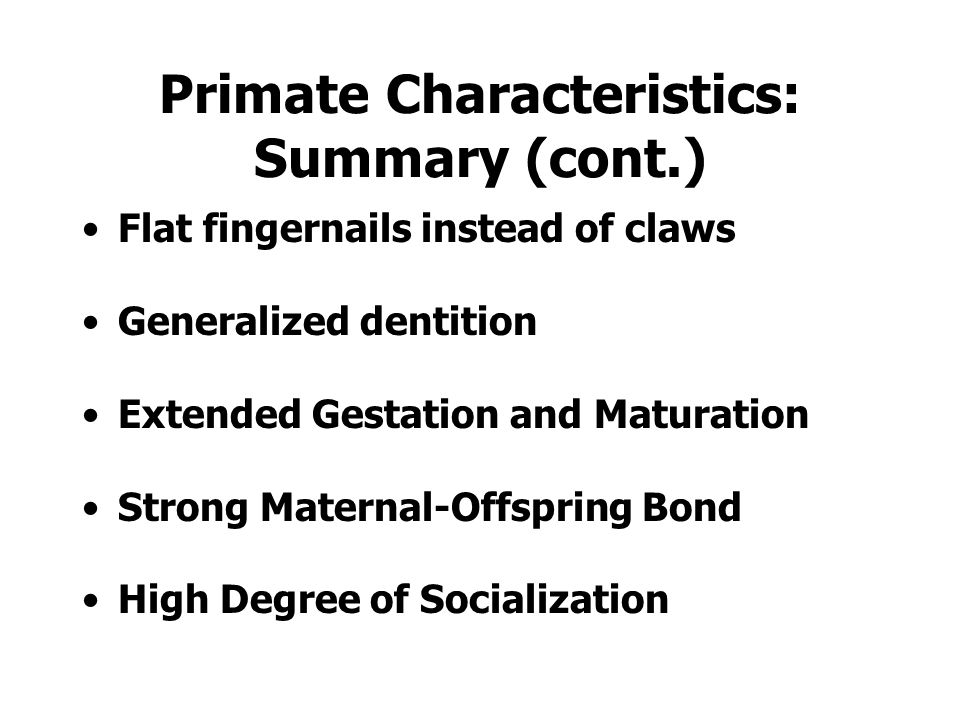 Primate Characteristics: Summary Large brains 3-D vision, Reduced Sense of Smell Flexible shoulder joints, Vertical Positioning of Trunk Hands and feet with five digits Grasping thumb