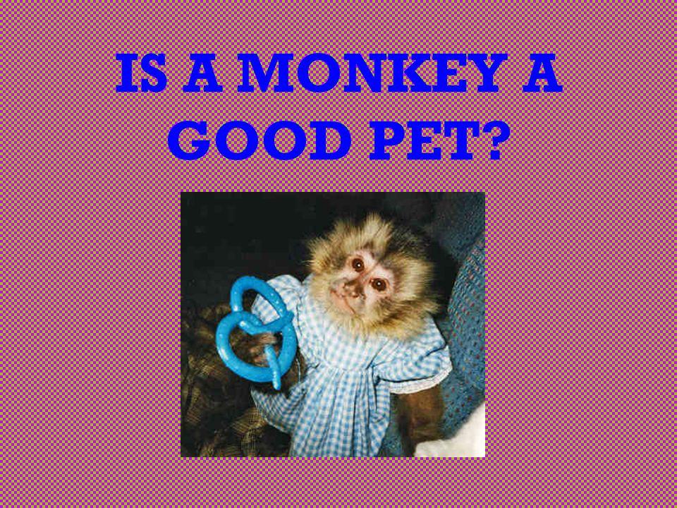 IS A MONKEY A GOOD PET?