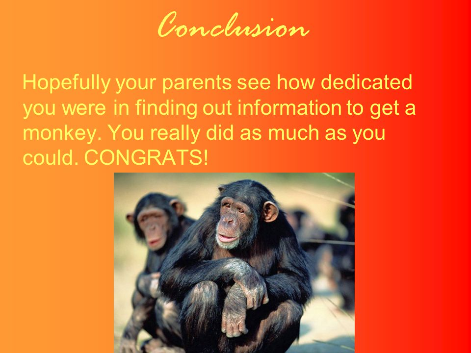 Conclusion Hopefully your parents see how dedicated you were in finding out information to get a monkey.