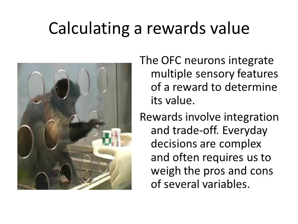 Calculating a rewards value The OFC neurons integrate multiple sensory features of a reward to determine its value. Rewards involve integration and tr