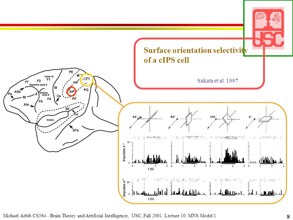 Michael Arbib CS564 - Brain Theory and Artificial Intelligence, USC, Fall 2001. Lecture 10. MNS Model 1 8 cIPS cell response Surface orientation selec