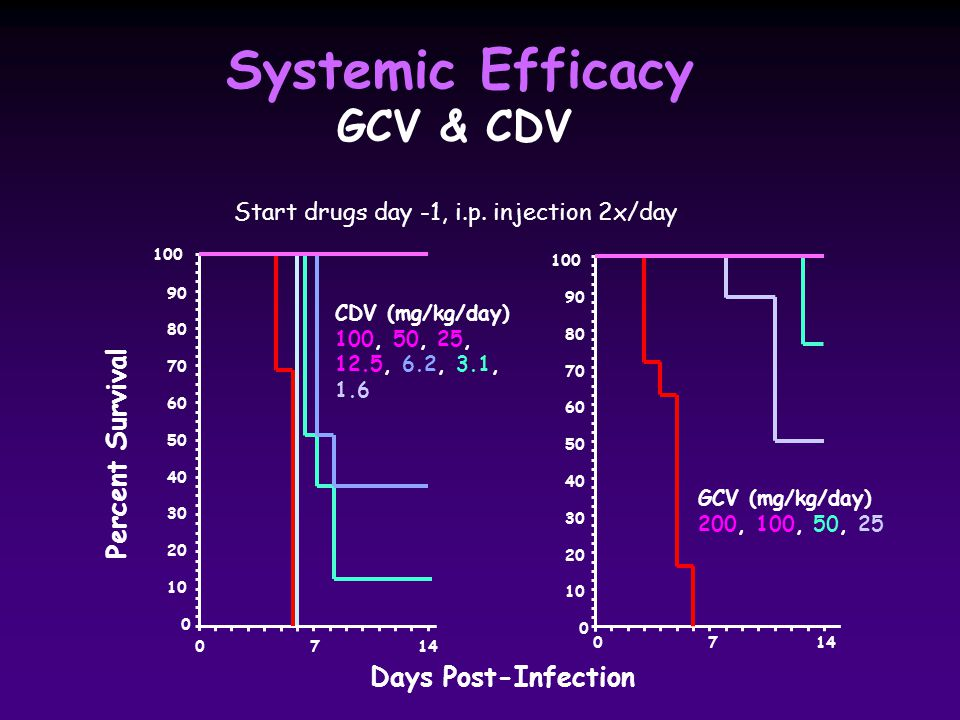 Percent Survival Days Post-Infection 0 7 14 100 90 80 70 60 50 40 30 20 10 0 CDV (mg/kg/day) 100, 50, 25, 12.5, 6.2, 3.1, 1.6 0 7 14 GCV (mg/kg/day) 200, 100, 50, 25 100 90 80 70 60 50 40 30 20 10 0 Systemic Efficacy GCV & CDV Start drugs day -1, i.p.
