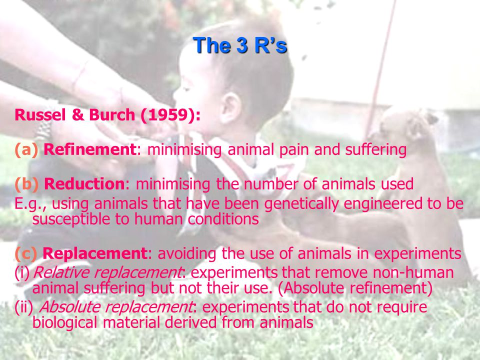 The 3 R's Russel & Burch (1959): (a) Refinement: minimising animal pain and suffering (b) Reduction: minimising the number of animals used E.g., using animals that have been genetically engineered to be susceptible to human conditions (c) Replacement: avoiding the use of animals in experiments (i)Relative replacement: experiments that remove non-human animal suffering but not their use.