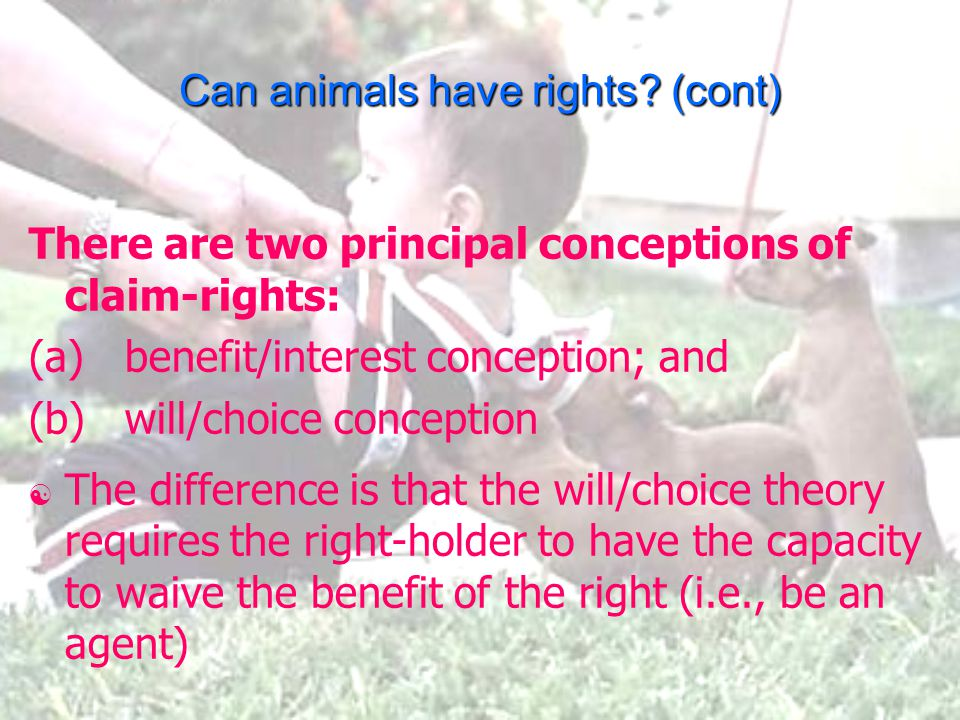 Can animals have rights.