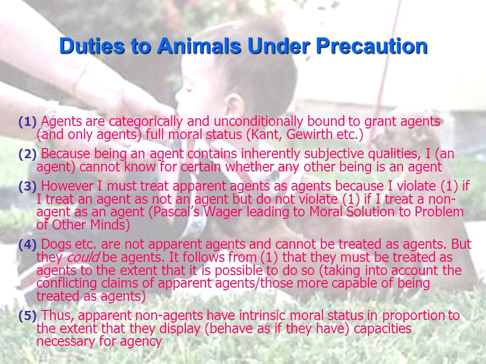 Duties to Animals Under Precaution (1) Agents are categorically and unconditionally bound to grant agents (and only agents) full moral status (Kant, Gewirth etc.) (2) Because being an agent contains inherently subjective qualities, I (an agent) cannot know for certain whether any other being is an agent (3) However I must treat apparent agents as agents because I violate (1) if I treat an agent as not an agent but do not violate (1) if I treat a non- agent as an agent (Pascal's Wager leading to Moral Solution to Problem of Other Minds) (4) Dogs etc.