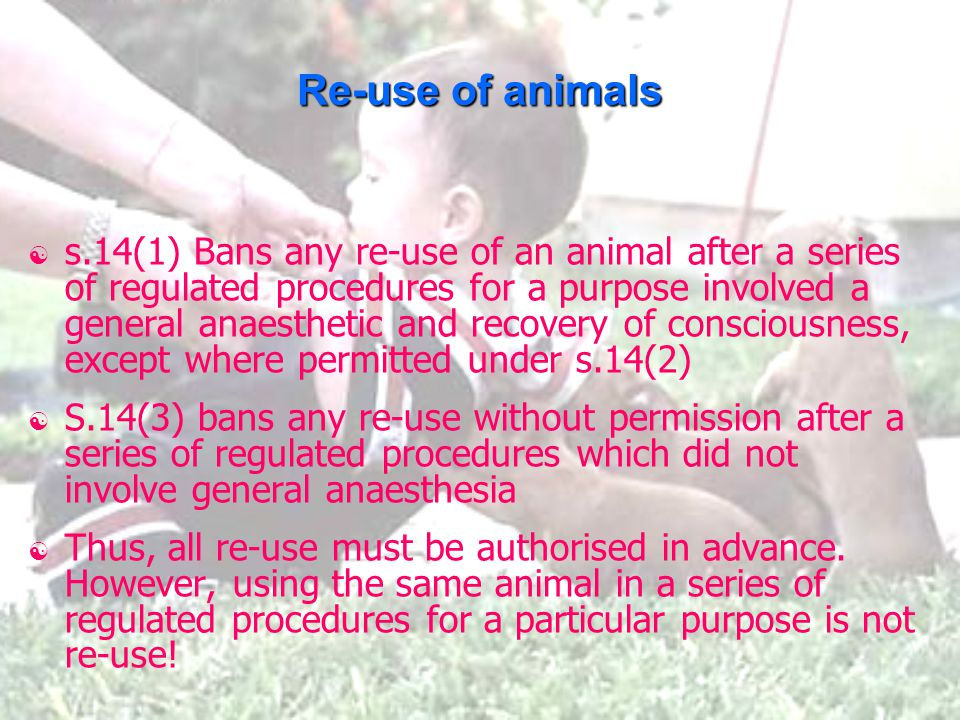 Re-use of animals  s.14(1) Bans any re-use of an animal after a series of regulated procedures for a purpose involved a general anaesthetic and recovery of consciousness, except where permitted under s.14(2)  S.14(3) bans any re-use without permission after a series of regulated procedures which did not involve general anaesthesia  Thus, all re-use must be authorised in advance.