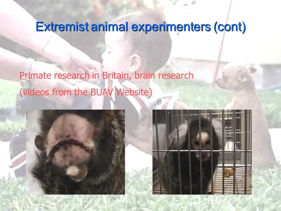 Extremists (b) Extremist animal supporters Rodney Coronado firebombed an animal research lab in Washington State University.