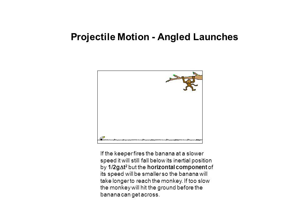 Projectile Motion - Angled Launches If the keeper fires the banana at a slower speed it will still fall below its inertial position by 1/2g  t 2 but
