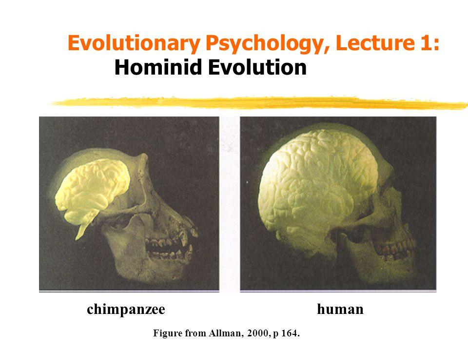 Hominid Brain Evolution.