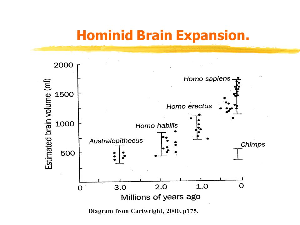 Hominid Brain Expansion. Diagram from Cartwright, 2000, p175.