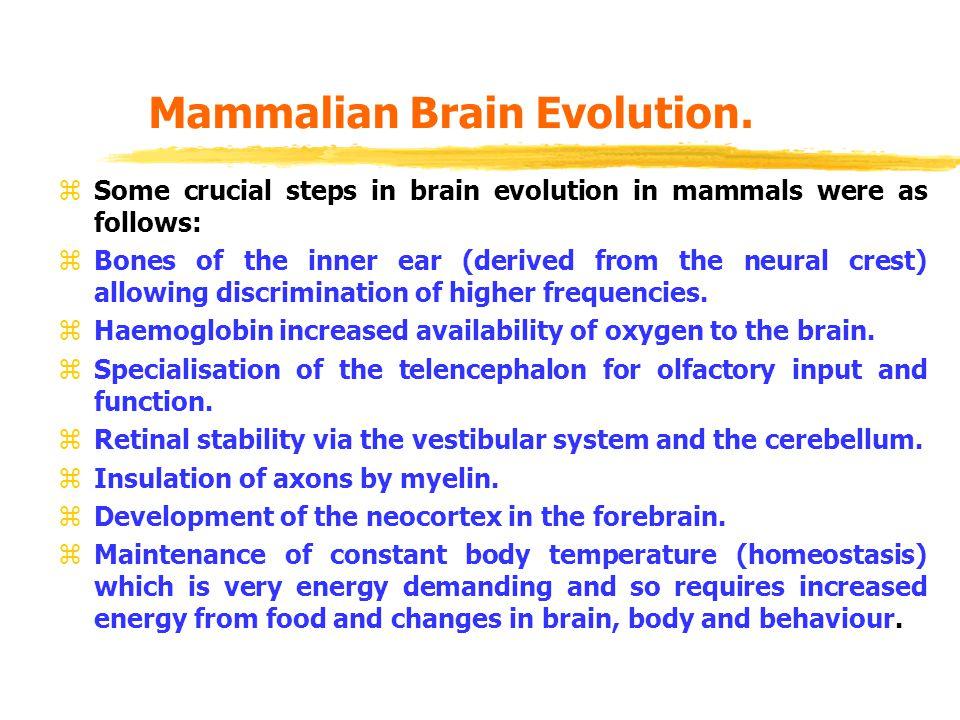 Mammalian Brain Evolution.