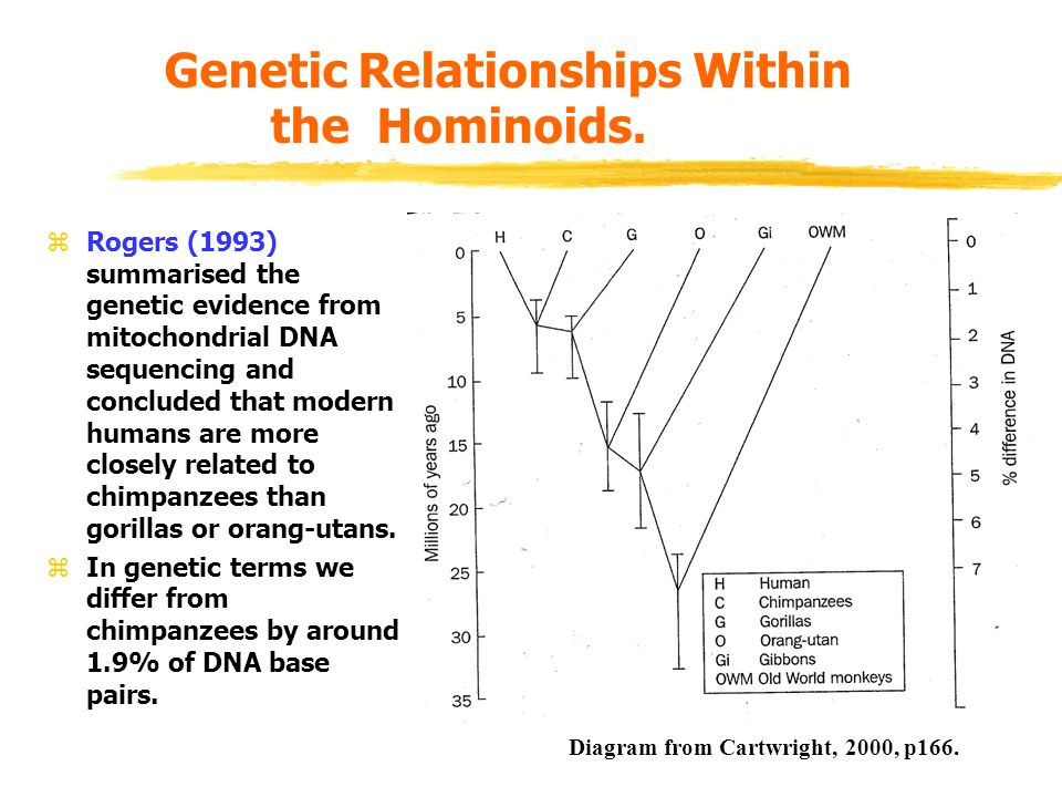 The Early Hominids.