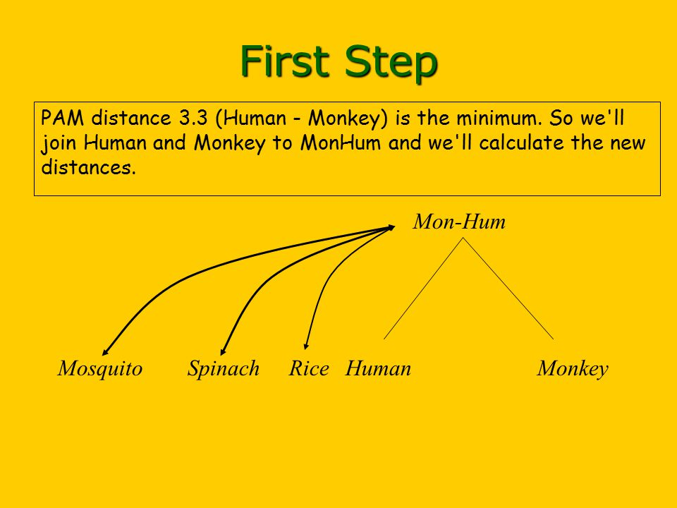 PAM distance 3.3 (Human - Monkey) is the minimum.