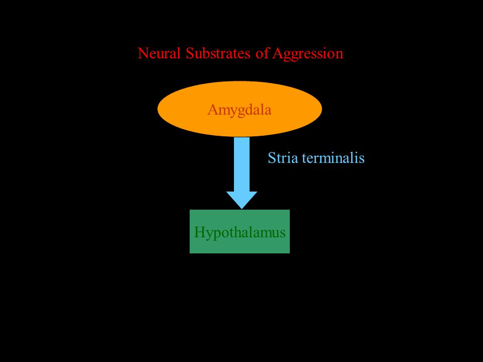 Neural Substrates of Aggression Amygdala Hypothalamus Stria terminalis not activated Flooding the area with testosterone has no effect
