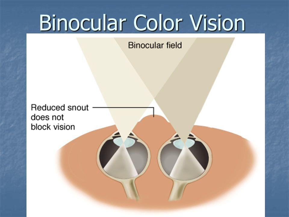 Binocular Color Vision