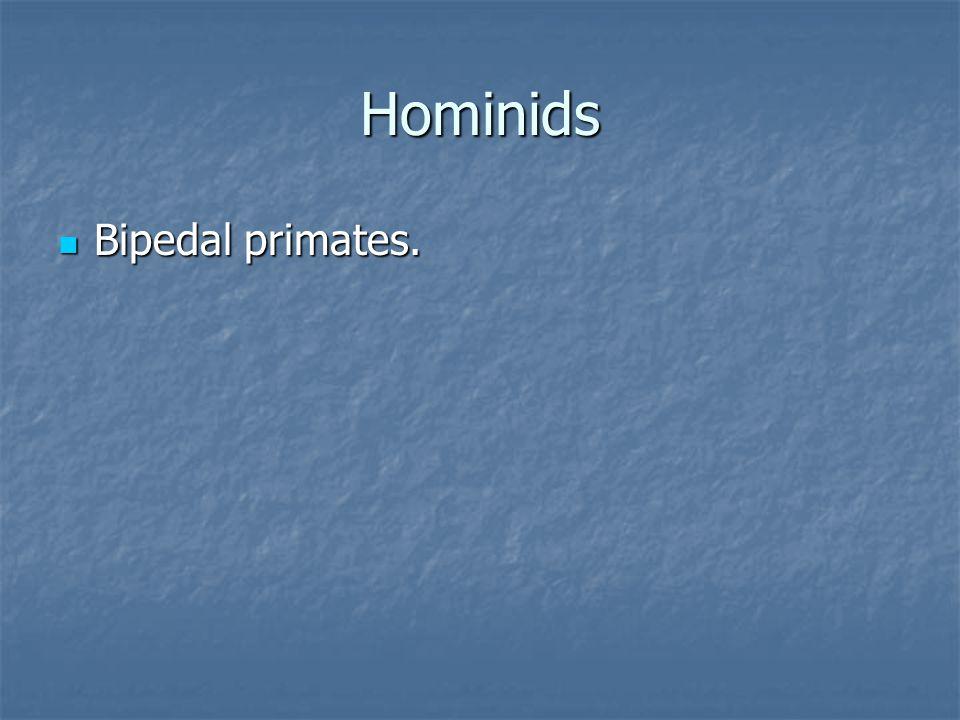 Hominids Bipedal primates. Bipedal primates.
