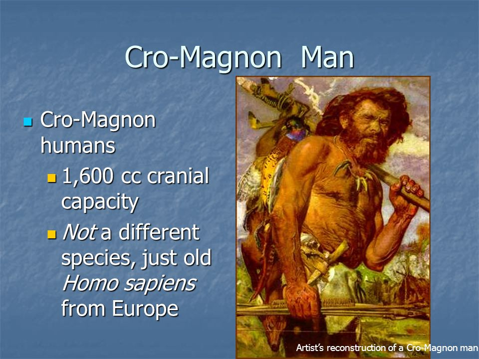 Cro-Magnon Man Cro-Magnon humans Cro-Magnon humans 1,600 cc cranial capacity 1,600 cc cranial capacity Not a different species, just old Homo sapiens from Europe Not a different species, just old Homo sapiens from Europe Artist's reconstruction of a Cro-Magnon man