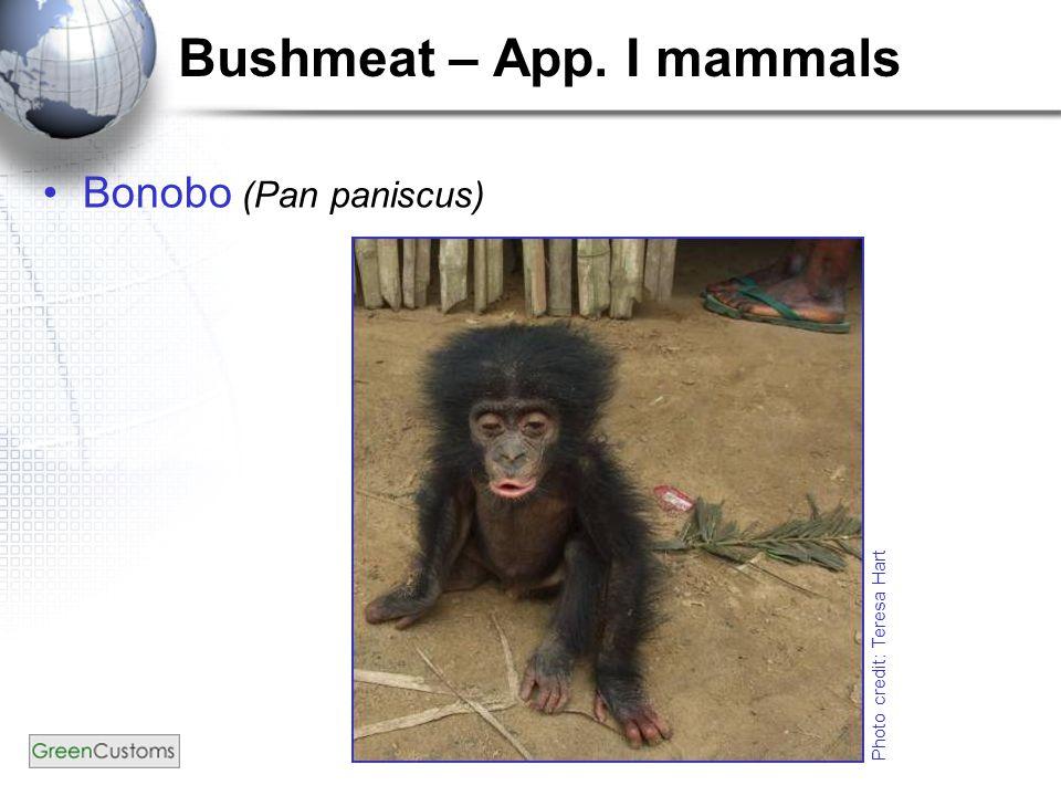Bushmeat – App. I mammals Bonobo (Pan paniscus) Photo credit: Teresa Hart