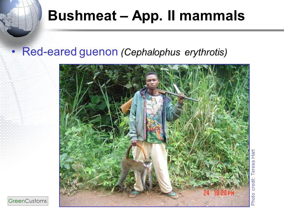 Bushmeat – App. II mammals Red-eared guenon (Cephalophus erythrotis) Photo credit: Teresa Hart