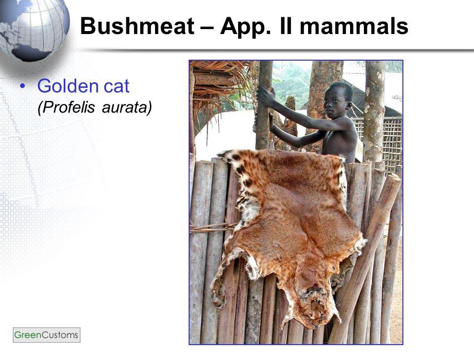 Bushmeat – App. II mammals Golden cat (Profelis aurata)