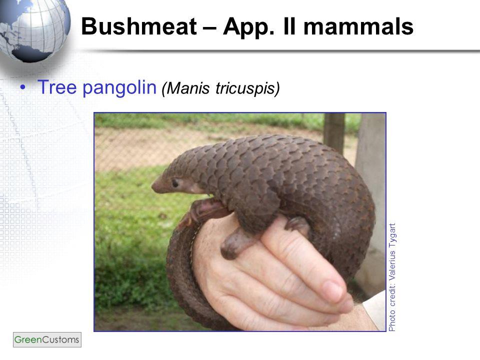 Bushmeat – App. II mammals Tree pangolin (Manis tricuspis) Photo credit: Valerius Tygart
