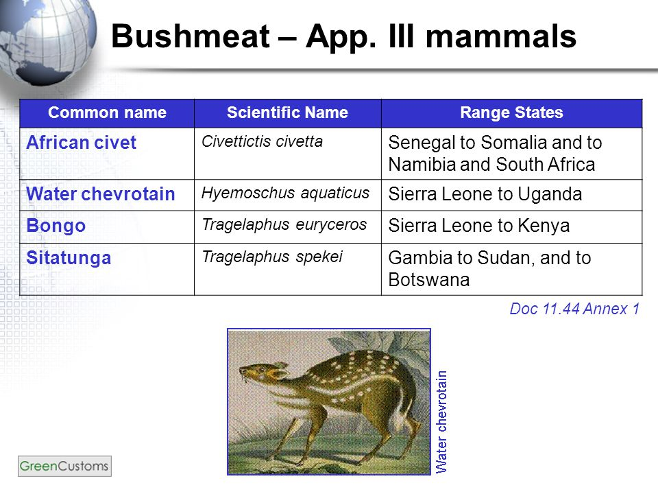 Bushmeat – App. III mammals Common nameScientific NameRange States African civet Civettictis civetta Senegal to Somalia and to Namibia and South Afric