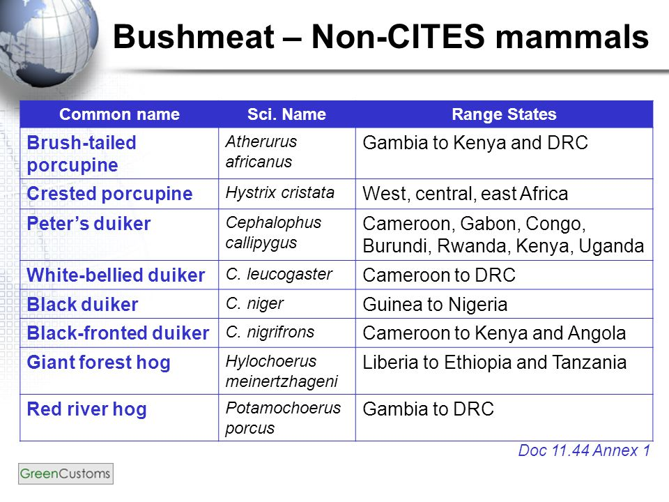 Bushmeat – Non-CITES mammals Doc 11.44 Annex 1 Common nameSci. NameRange States Brush-tailed porcupine Atherurus africanus Gambia to Kenya and DRC Cre