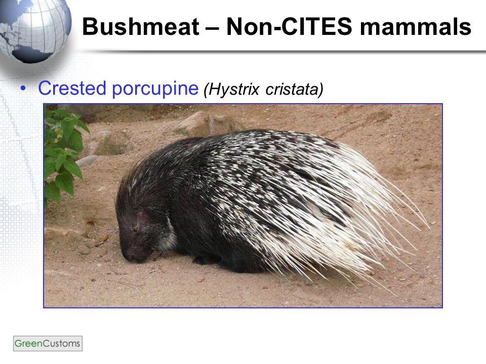 Bushmeat – Non-CITES mammals Crested porcupine (Hystrix cristata)
