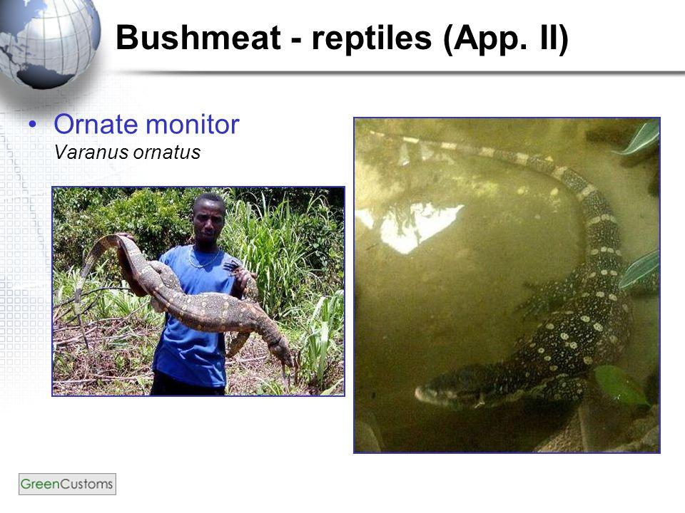 Bushmeat - reptiles (App. II) Ornate monitor Varanus ornatus
