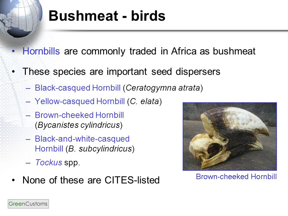 Bushmeat - birds Hornbills are commonly traded in Africa as bushmeat These species are important seed dispersers –Black-casqued Hornbill (Ceratogymna atrata) –Yellow-casqued Hornbill (C.