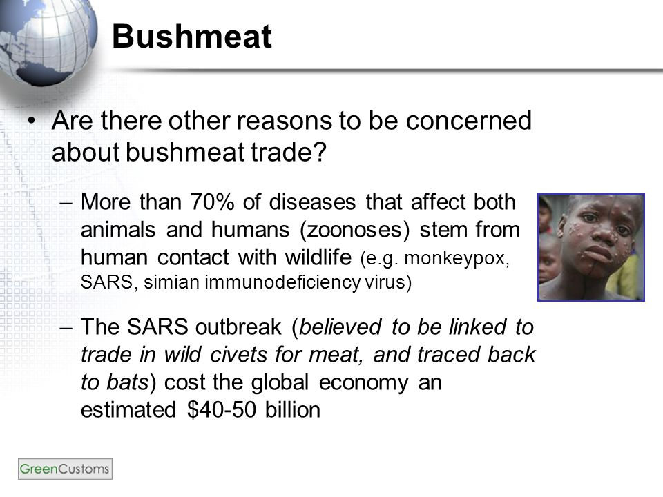 Bushmeat Are there other reasons to be concerned about bushmeat trade.