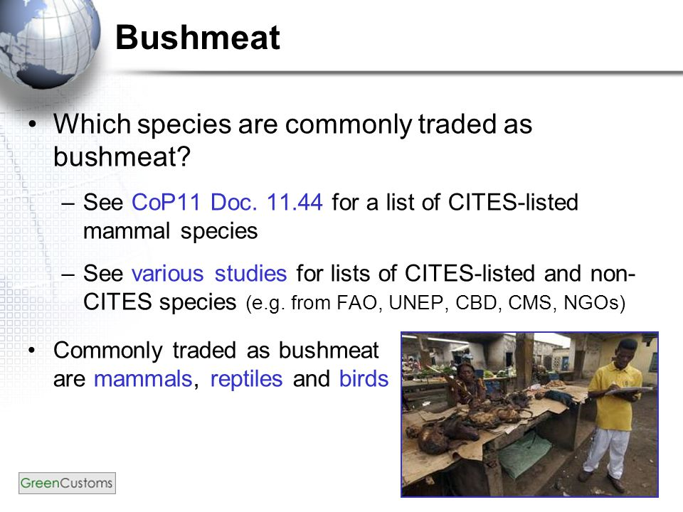 Bushmeat Which species are commonly traded as bushmeat.