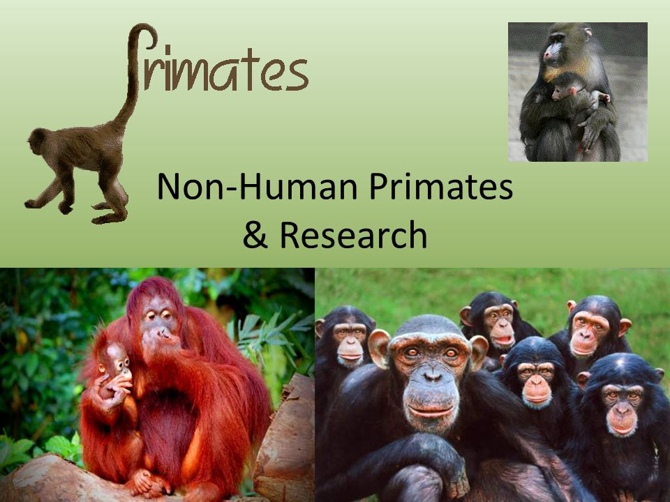 WHAT HAS BEEN ACHIEVED WITH RESEARCH ON PRIMATES.