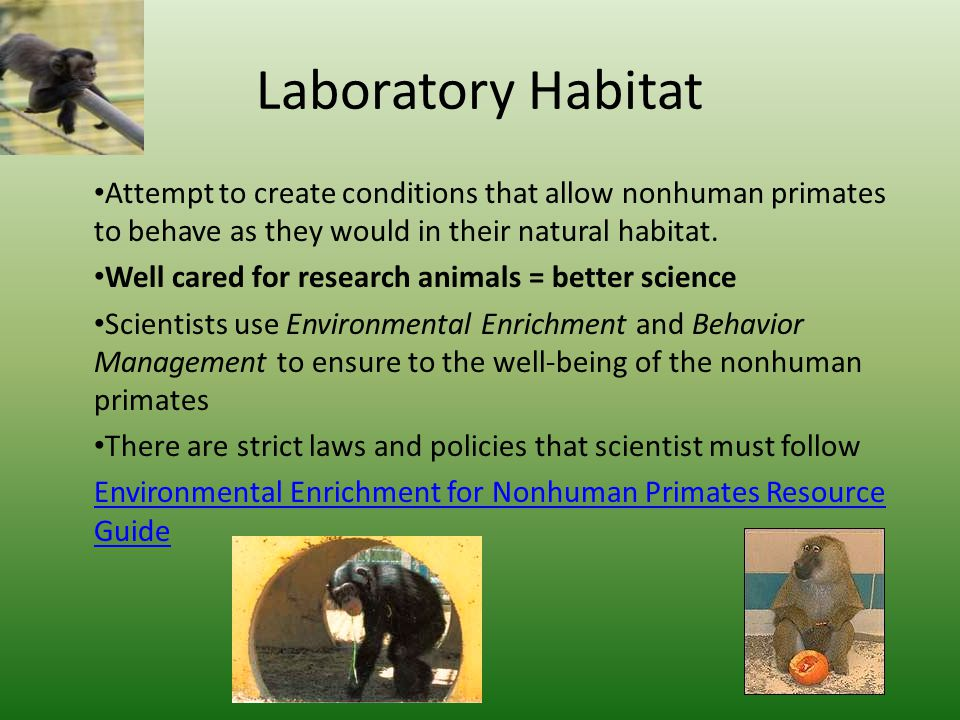 Laboratory Habitat Attempt to create conditions that allow nonhuman primates to behave as they would in their natural habitat.