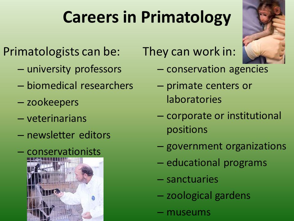 Careers in Primatology Primatologists can be: – university professors – biomedical researchers – zookeepers – veterinarians – newsletter editors – conservationists They can work in: – conservation agencies – primate centers or laboratories – corporate or institutional positions – government organizations – educational programs – sanctuaries – zoological gardens – museums