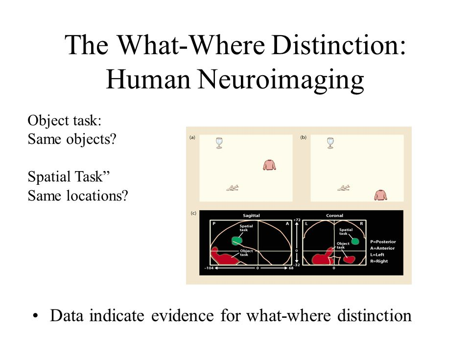 The What-Where Distinction: Human Neuroimaging Data indicate evidence for what-where distinction Object task: Same objects.