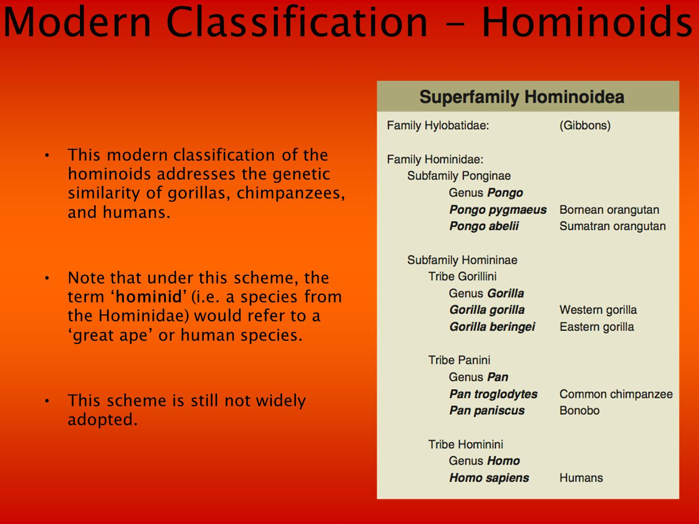 Modern Classification - Hominoids This modern classification of the hominoids addresses the genetic similarity of gorillas, chimpanzees, and humans.