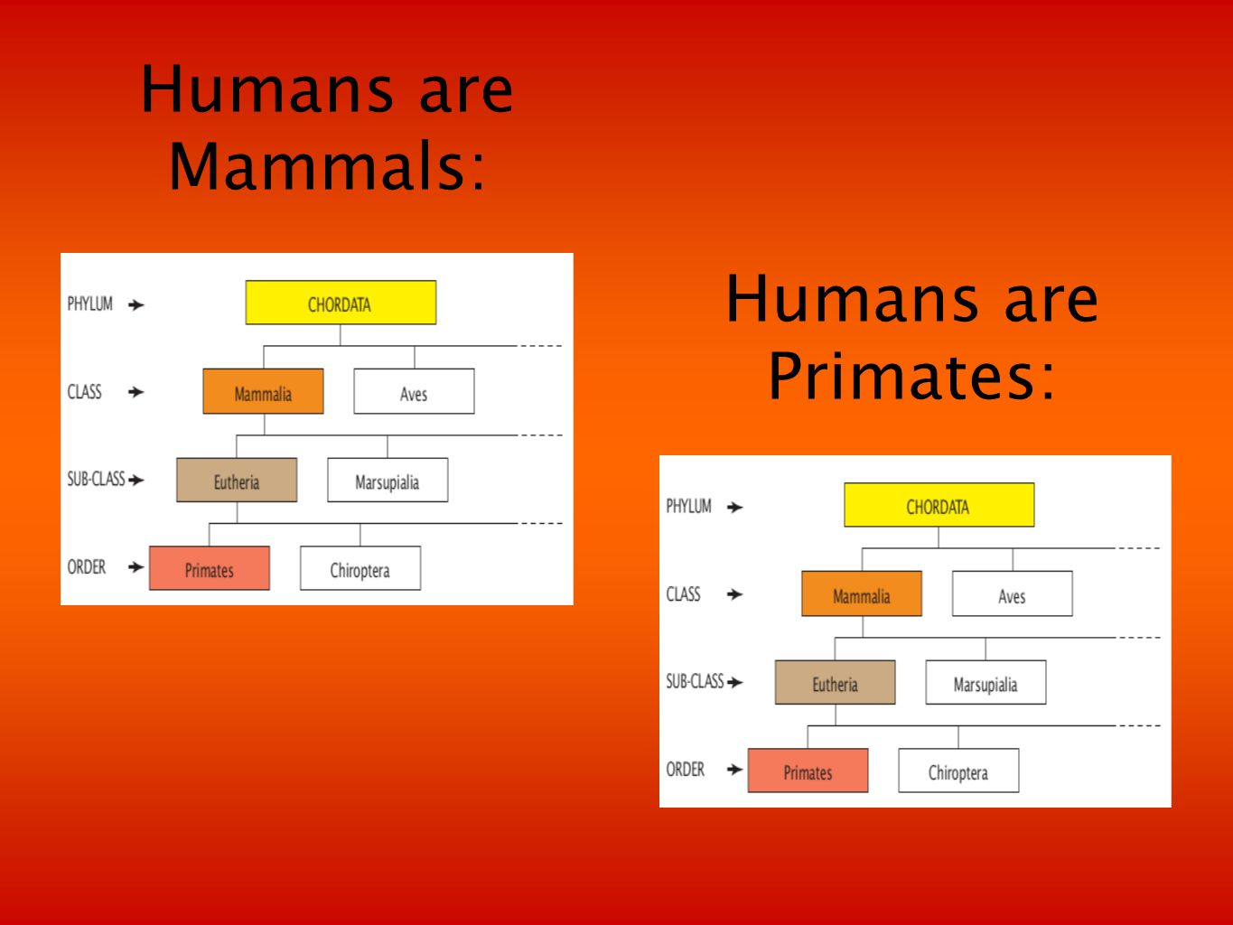 Humans are Mammals: Humans are Primates: