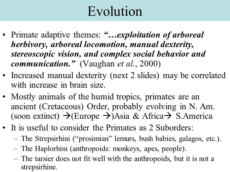 Anthropoid primates: Phylogeny & general trends Increased body-mass Increased brain-mass/body-mass Longer life Increased manual dexterity Specialization of eyes: –Binocular vision (at expense of olfaction) –Increased density of cones –Emphasis of visual acuity over light-gathering